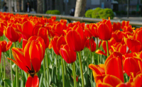 春期講習お申込み受付中!